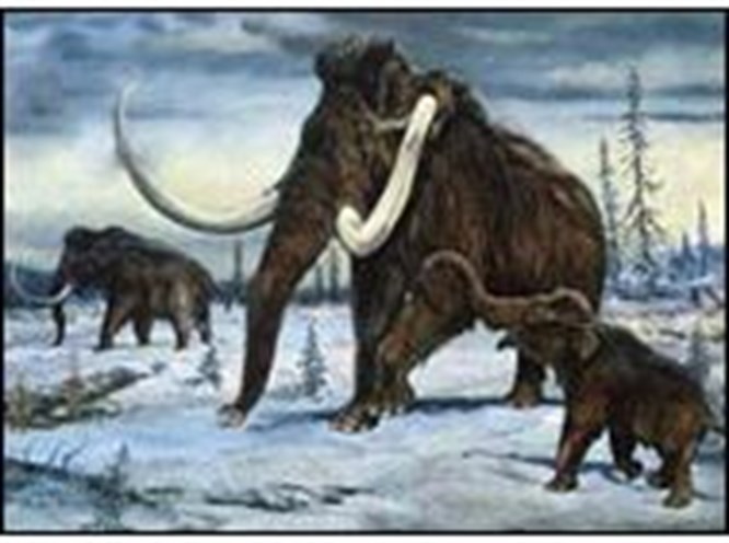 Kim mamut almak ister?